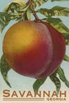 Savannah, Georgia - Peach - Vintage Lithograph - Lantern Press Artwork