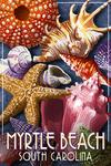 Myrtle Beach, South Carolina - Starfish And Shells - Lantern Press Artwork
