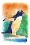 Gentoo Penguin - Watercolor - Lantern Press Artwork