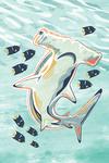Graphic Pastel - Hammerhead Shark - Lantern Press Artwork
