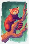 Red Panda - Vivid -  Lantern Press Artwork