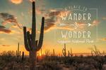 Saguaro National Park, Arizona - Wander & Wonder - Lantern Press Photography