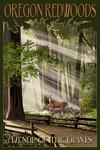 Oregon Redwoods - Avenue of the Giants - Deer & Fawns - Lantern Press Artwork