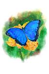 Blue Morpho Butterfly - Watercolor - Lantern Press Artwork - Lantern Press Artwork