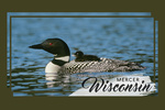 Mercer, Wisconsin - Loon & Chick - Contour