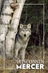 Mercer, Wisconsin - Wolf in Forest - Lantern Press Photography