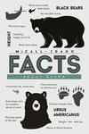 McCall, Idaho - Facts About Black Bears - Lantern Press Artwork