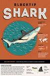 Shark - Black Tip - Facts About - Lantern Press Artwork
