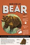 Grizzly Bear - Facts About - Lantern Press Artwork