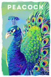 Peacock - Vivid Series - Lantern Press Artwork