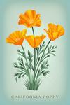 Vintage Flora - California Poppy - Lantern Press Artwork