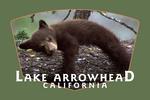Lake Arrowhead, California - Black Bear in Tree - Contour - Lantern Press Photography