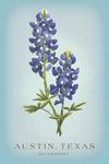 Austin, Texas - Vintage Flora - State Series - Bluebonnet