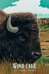 Wind Cave National Park, South Dakota - Bison - Painterly National Park Series