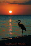Gloucester, Virginia - Heron & Sunset - Lantern Press Photography