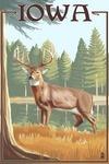 White Tailed Deer - Iowa - Lantern Press Poster