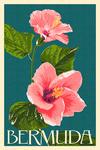 Bermuda - Pink Hibiscus - Lantern Press Poster
