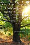 Jeremiah 29:11 - Inspirational - Lantern Press Artwork