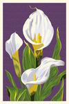 Calla Lily - Letterpress - Lantern Press Poster