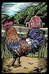 Rooster - Scratchboard - Lantern Press Artwork
