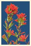 Indian Paintbrush - Letterpress - Lantern Press Artwork