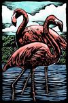 Flamingos - Scratchboard - Lantern Press Artwork