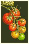 Tomatoes - Letterpress - Lantern Press Poster