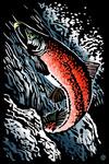 Sockeye Salmon - Scratchboard - Lantern Press Artwork