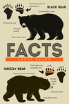 Facts About Bears - Grizzly & Black Bear - Lantern Press Artwork