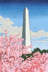 Washington, DC - Washington Monument - Cherry Blossoms - Lantern Press Artwork
