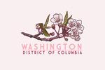Washington, DC - Cherry Blossom - Lantern Press Artwork