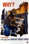 Smokey Bear - Why - Vintage Poster