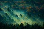 Sunlight & Fog in Trees - Lantern Press Photography