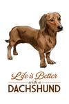Dachshund Brown - Life is Better - White Background - Lantern Press Artwork