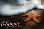 Olympic National Park, Washington - Starfish & Sea Foam - Lantern Press Photography