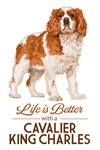 Cavalier King Charles - Life is Better - White Background - Lantern Press Artwork