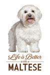 Maltese - Life is Better - White Background - Lantern Press Artwork