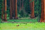 Bear & Meadow - Photography