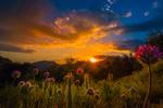 Flowers on Hillside - Sunset - Photography