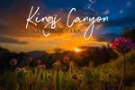 Kings Canyon National Park - Flowers on Hillside - Sunset - Lantern Press Photography