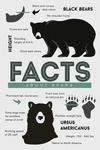 Facts About Black Bears - Lantern Press Artwork