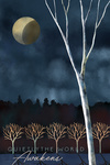 Quietly the World Awakens - Night Sky - Winter - Lantern Press Artwork