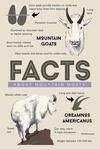 Facts About Mountain Goats - Lantern Press Artwork